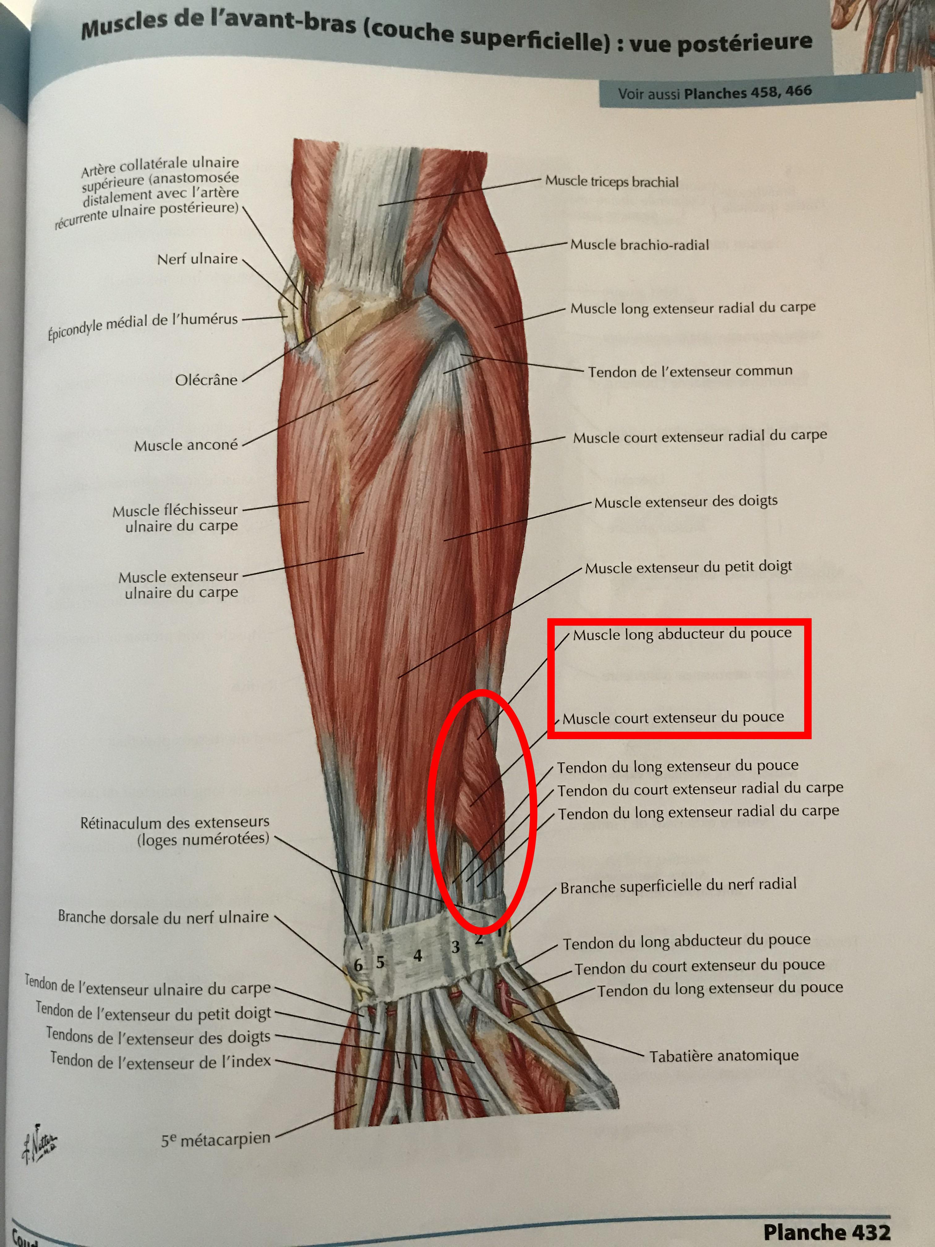 tendinite poignet anatomie